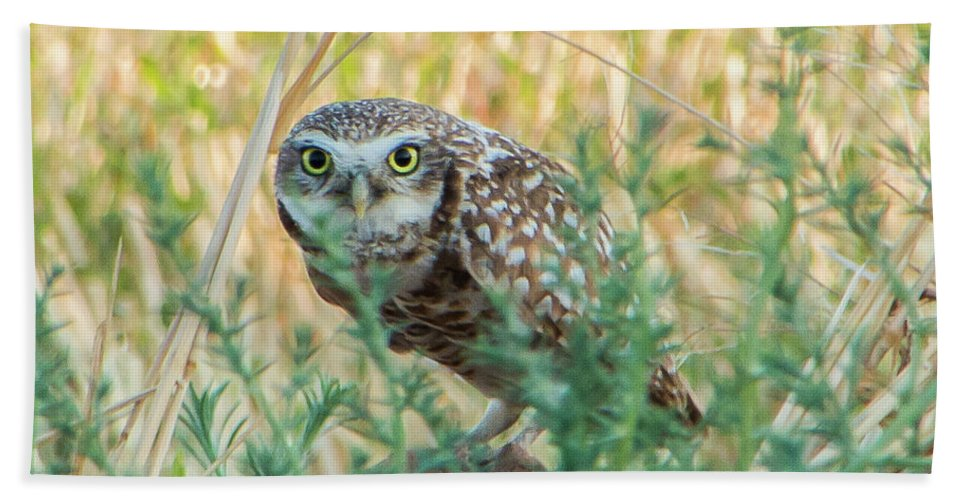 Owls Hand Towel featuring the photograph See You by Kelly Lemen