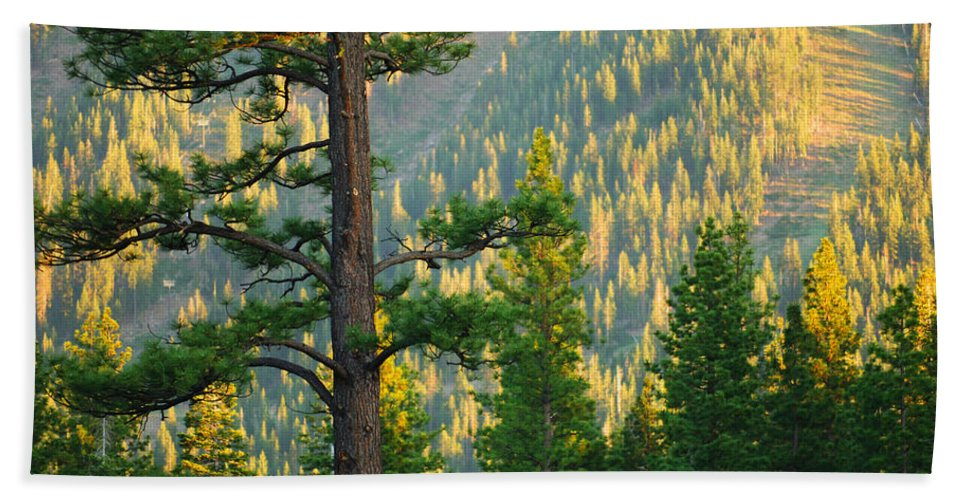 Forest Bath Towel featuring the photograph Seeing The Forest Through The Tree by Jill Reger