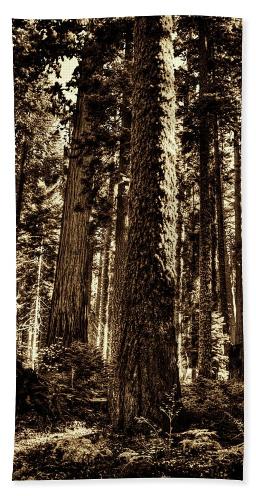 California Hand Towel featuring the photograph Sequoia Grove Along Crescent Meadow Loop by Roger Passman