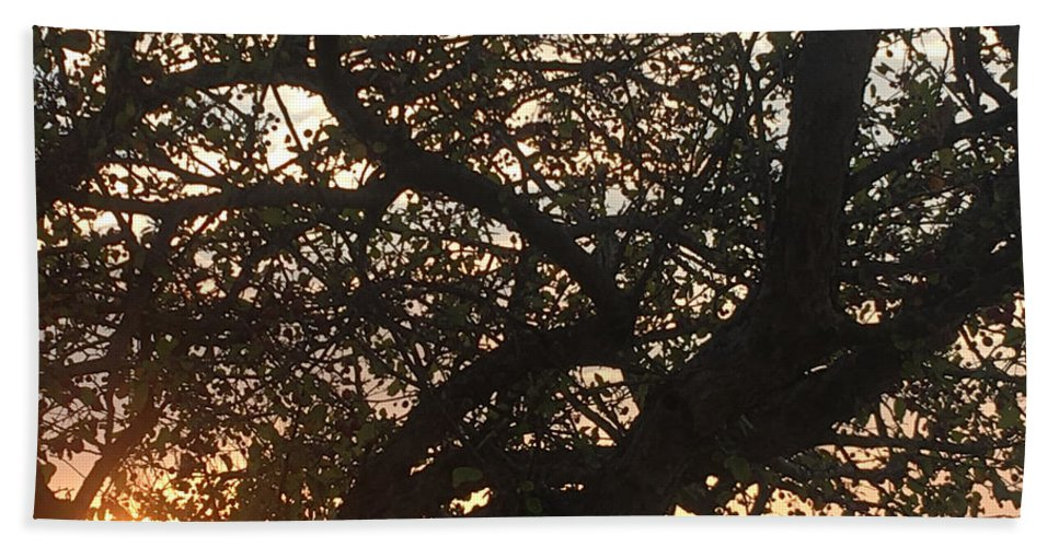 Setting Sun Hand Towel featuring the photograph Setting Sun In Tree by Amy Lionheart