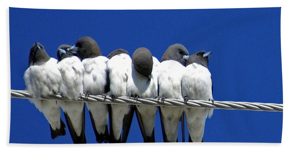 Animals Hand Towel featuring the photograph Seven Swallows Sitting by Holly Kempe
