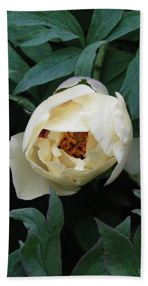 Flowers Hand Towel featuring the photograph Sexy Peony by Deborah Crew-Johnson
