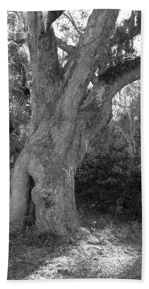 Tree Bath Sheet featuring the photograph Kingsley Plantation Tree by Spencer Studios
