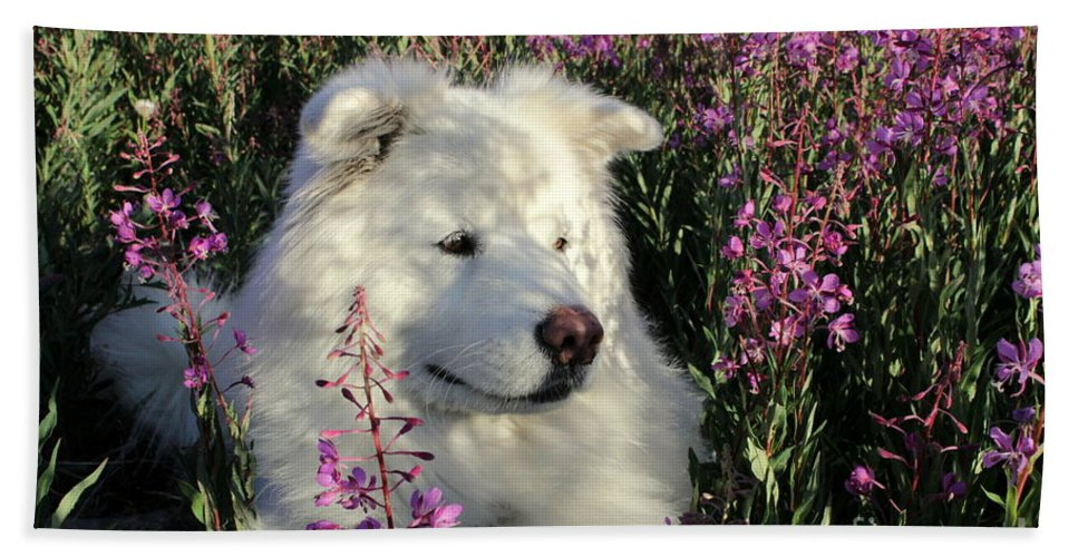 Samoyed Hand Towel featuring the photograph Shadows by Fiona Kennard
