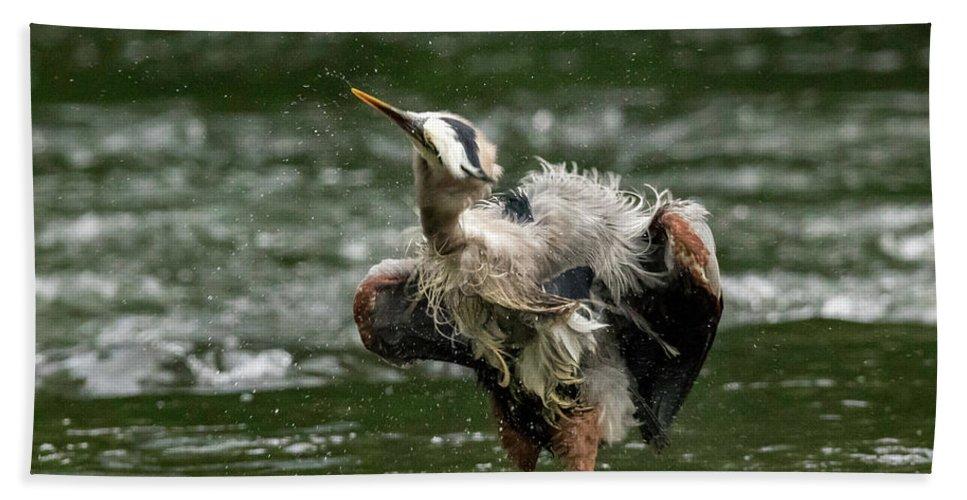 Bird Bath Sheet featuring the photograph Shake It Off by Travis Boyd
