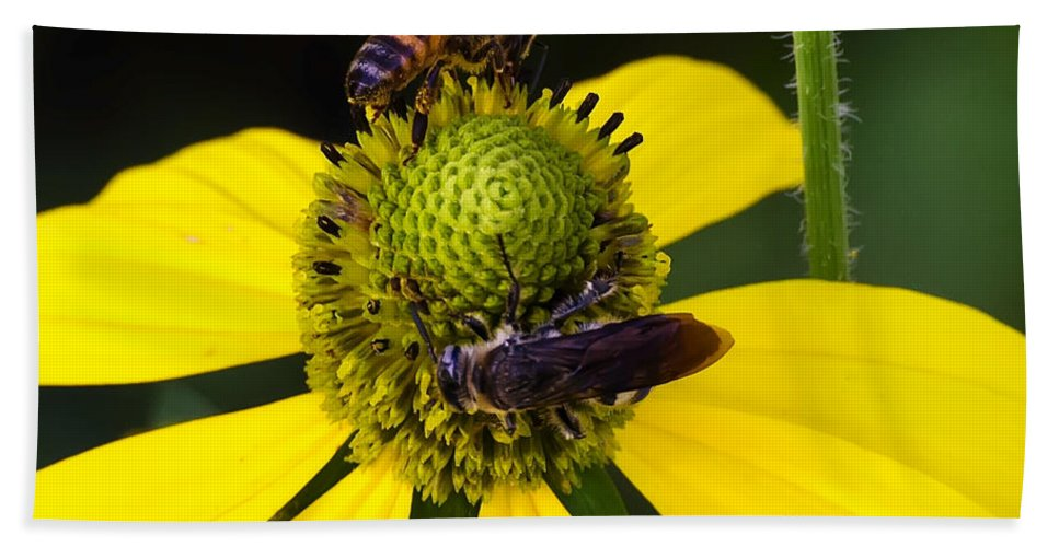 Echinacea Hand Towel featuring the photograph Sharing by Steve Samples