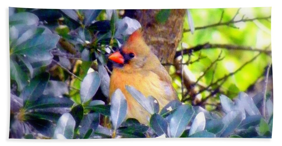 Cardinal Hand Towel featuring the photograph She Waits by Karen Wiles