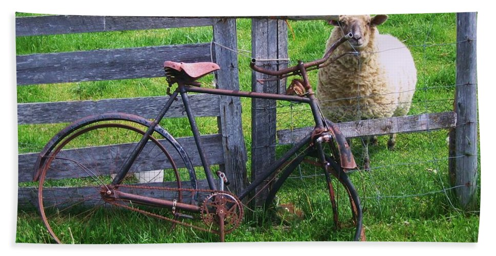 Photograph Sheep Bicycle Fence Grass Bath Sheet featuring the photograph Sheep And Bicycle by Seon-Jeong Kim