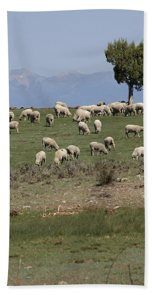 Sheep Bath Sheet featuring the photograph Sheep Country by Jerry McElroy