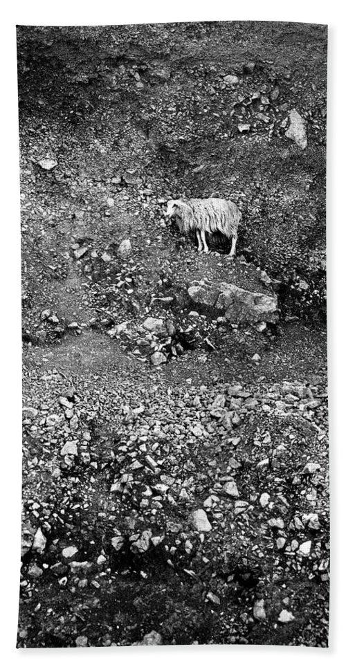 Lehtokukka Hand Towel featuring the photograph Sheep In Bw by Jouko Lehto
