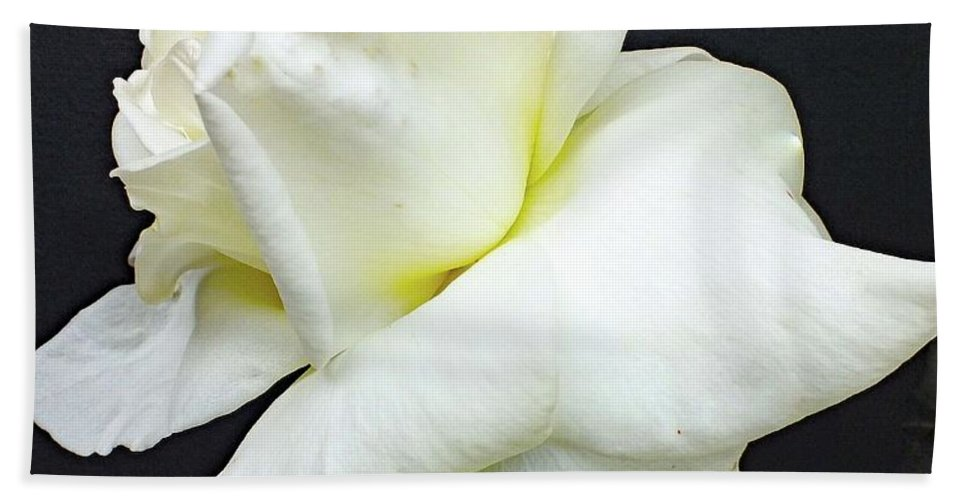 Rose Bath Sheet featuring the photograph Sheer White Elegance - Rose by Cindy Treger