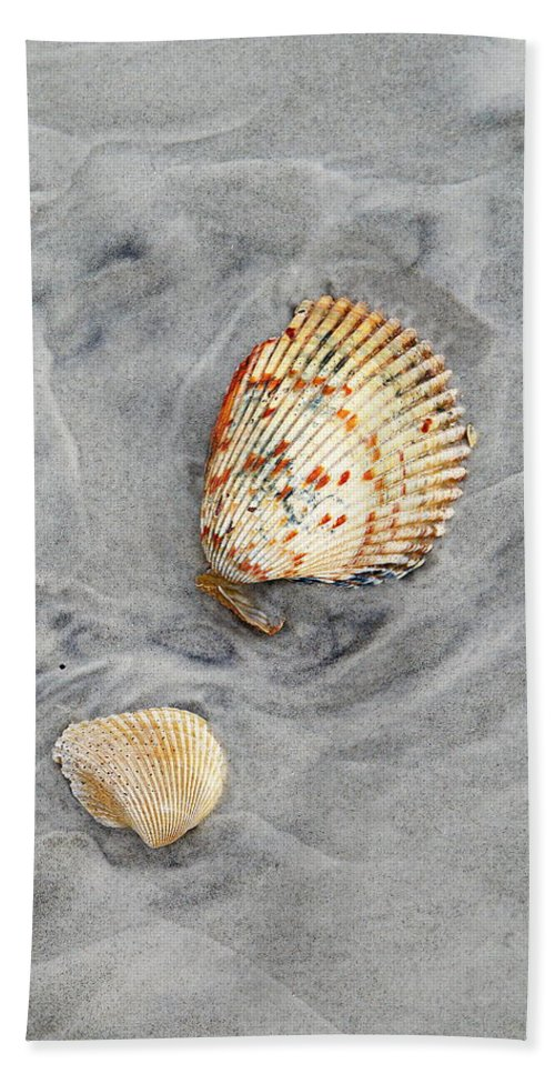Beach Bath Sheet featuring the photograph Shells On The Beach II by Daniel Caracappa