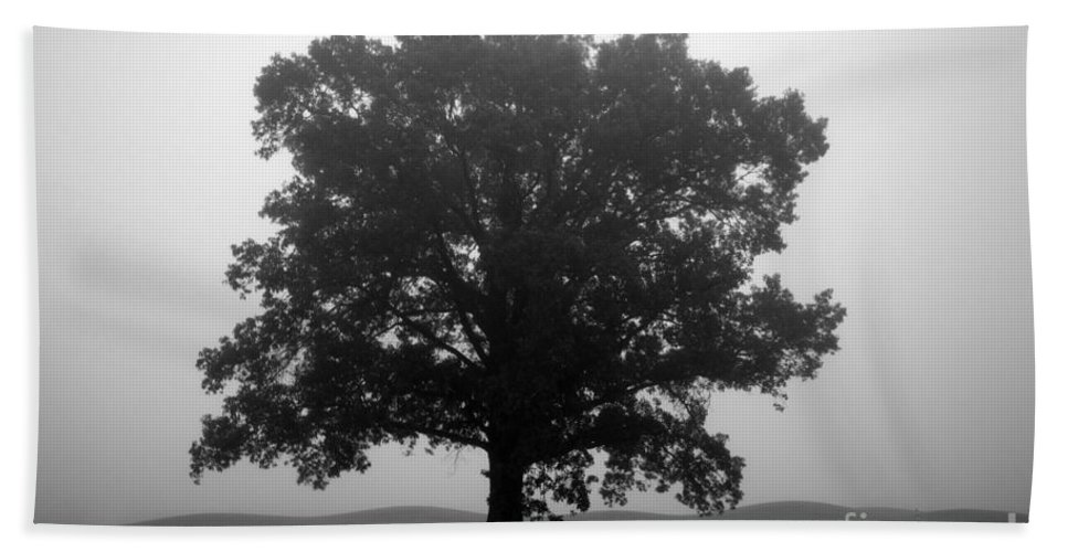 foggy Trees Bath Sheet featuring the photograph Shelter by Amanda Barcon
