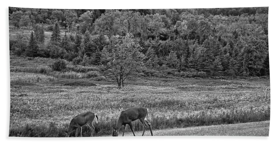 Canaan Valley Hand Towel featuring the photograph Shh... Bw by Steve Harrington