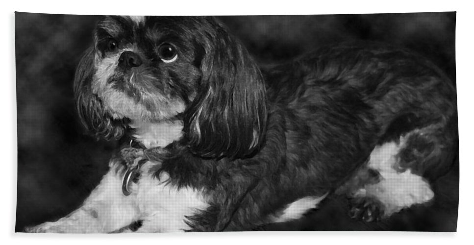 3scape Bath Towel featuring the painting Shih Tzu by Adam Romanowicz