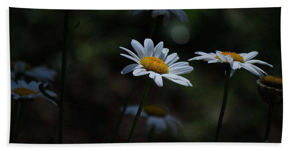 Daisy Hand Towel featuring the photograph Shine On Me by Lori Tambakis