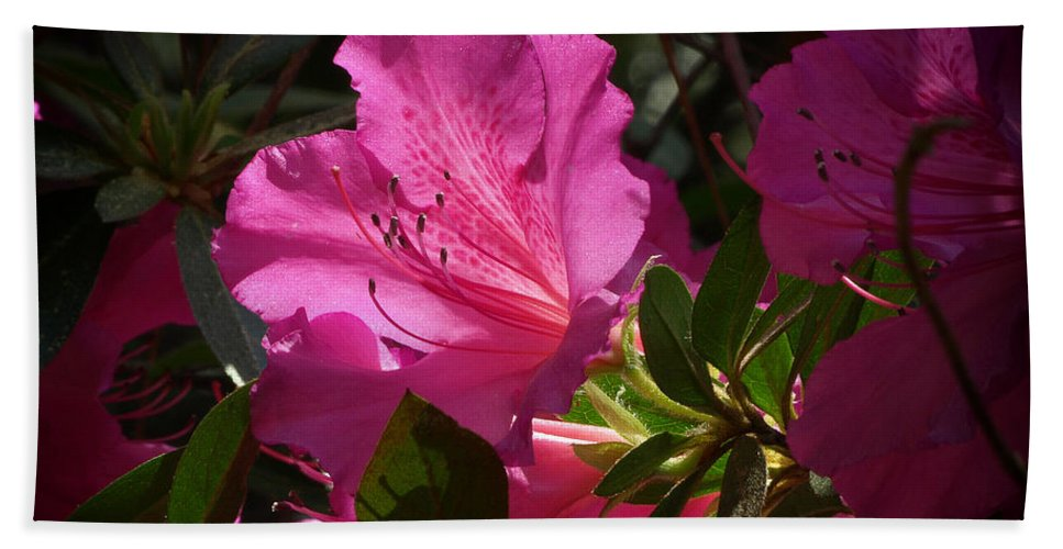 Ann Keisling Hand Towel featuring the photograph Shining Azalea by Ann Keisling