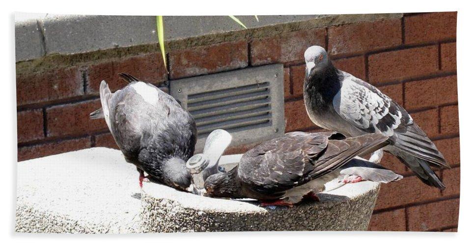 Pigeons Bath Sheet featuring the photograph Shooo by Ian MacDonald