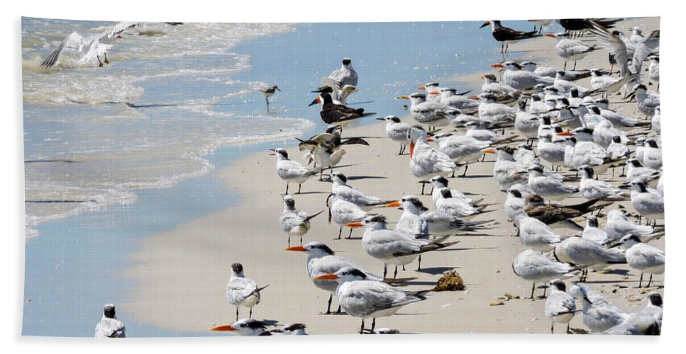 Seagulls Hand Towel featuring the photograph Shorebird Gathering by Marilee Noland