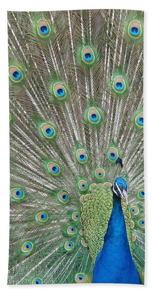 Peacock Bath Sheet featuring the photograph Showing Off by Margaret Bobb