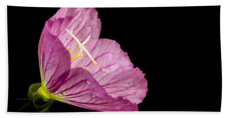Nature Bath Sheet featuring the photograph Showy Evening Primrose by Jonathan Nguyen