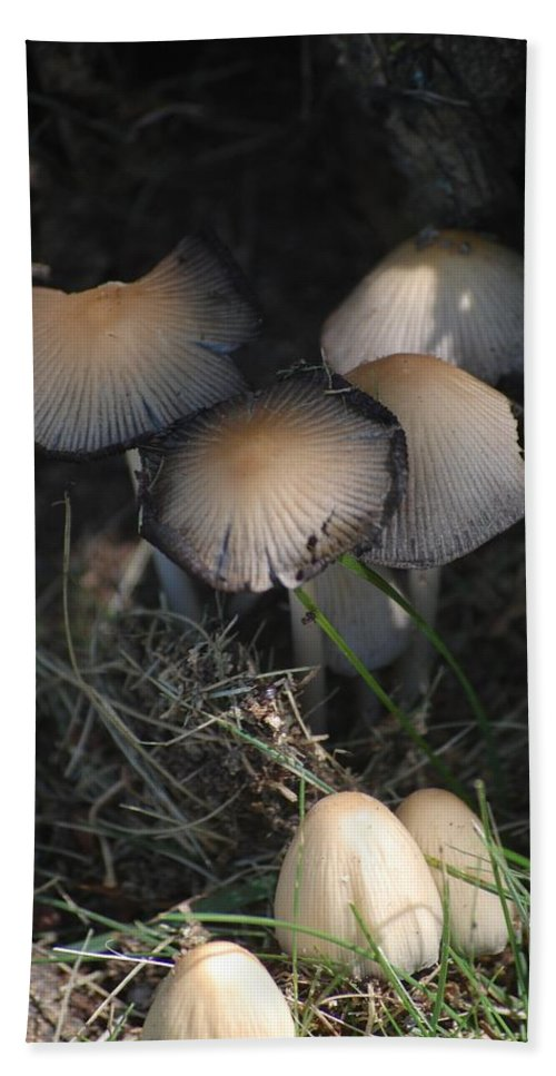 Digital Photograph Hand Towel featuring the photograph Shrooms 1 by David Lane