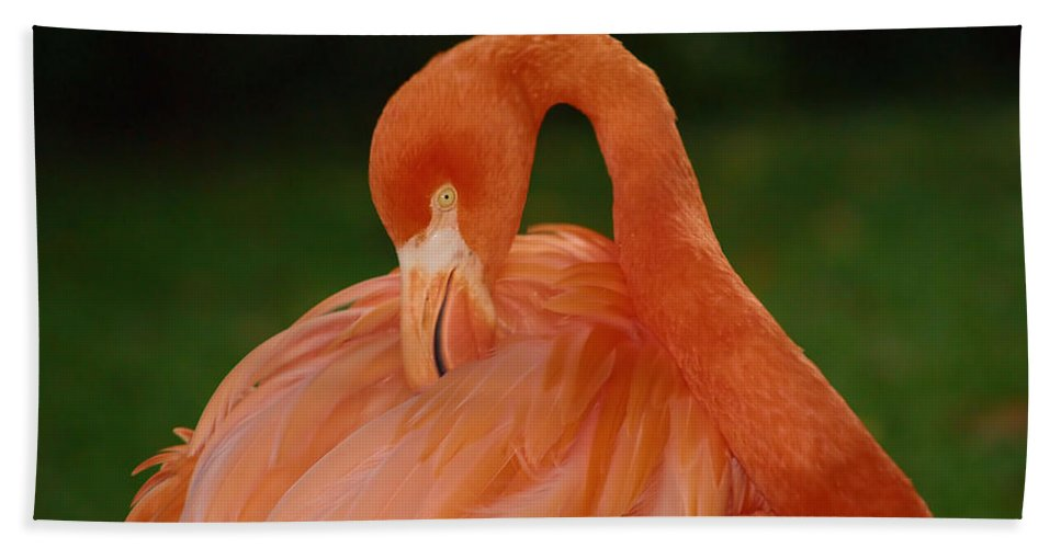 Flamingo Hand Towel featuring the photograph shy by Gaby Swanson