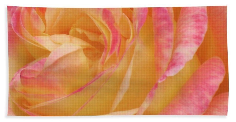 Close-up Photo Photography Flower Plant Yellow Rose Pink Hand Towel featuring the photograph Shy Yellow Rose by Christina Geiger