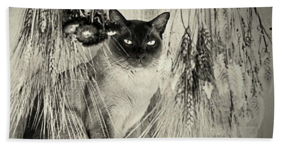 Cats Bath Sheet featuring the photograph Siamese Cat Posing In Black And White by Smilin Eyes Treasures
