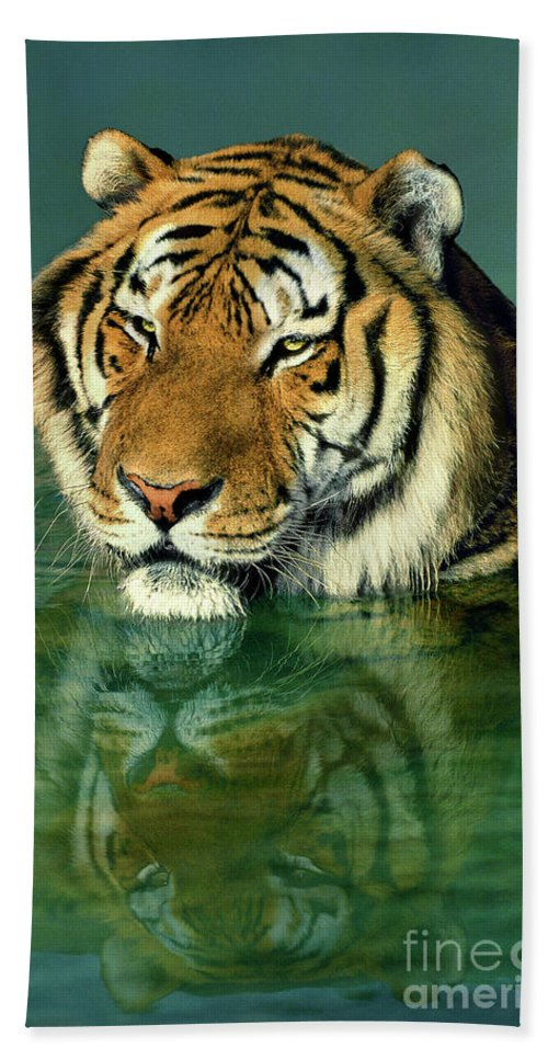 Siberian Tiger Bath Towel featuring the photograph Siberian Tiger Reflection Wildlife Rescue by Dave Welling