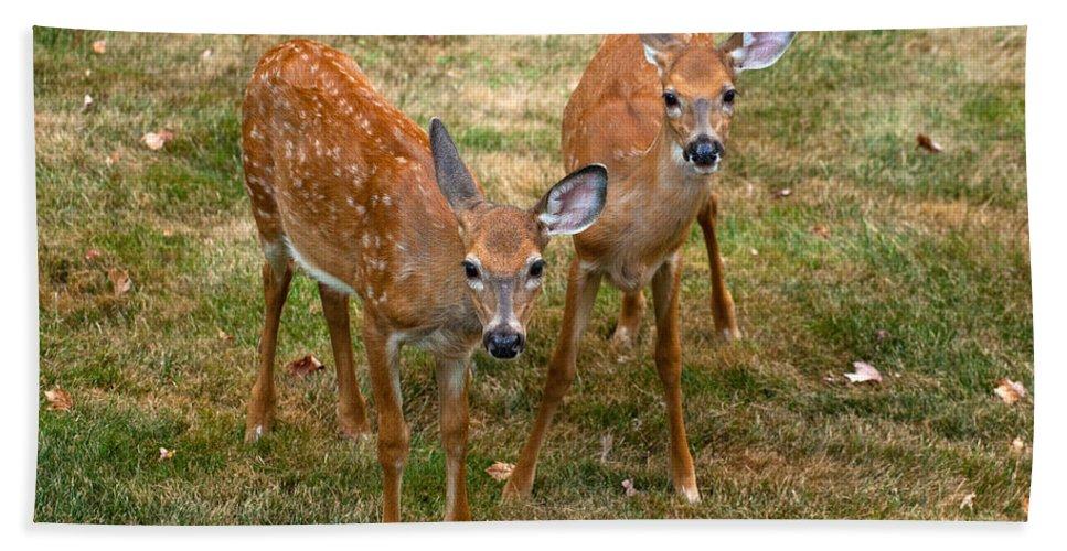 Deer Bath Sheet featuring the photograph Siblings Visit by Karol Livote
