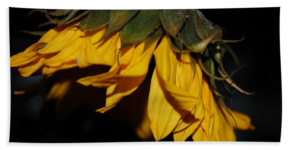Photograph Of Sunflower From The Side Hand Towel featuring the photograph Sideview Sunflower by David E Anderson