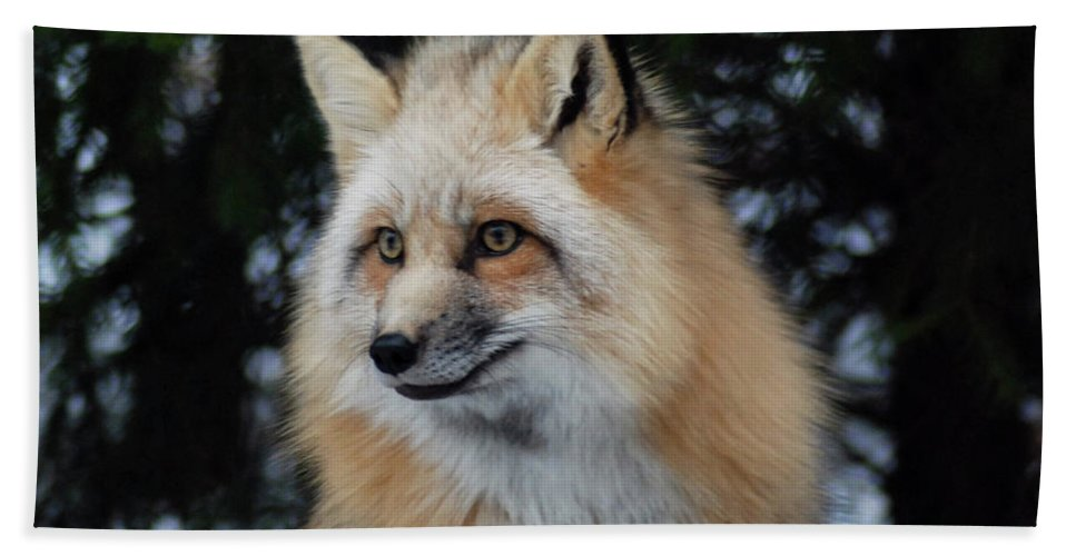 Fox Hand Towel featuring the photograph Sierra's Profile by Richard Bryce and Family