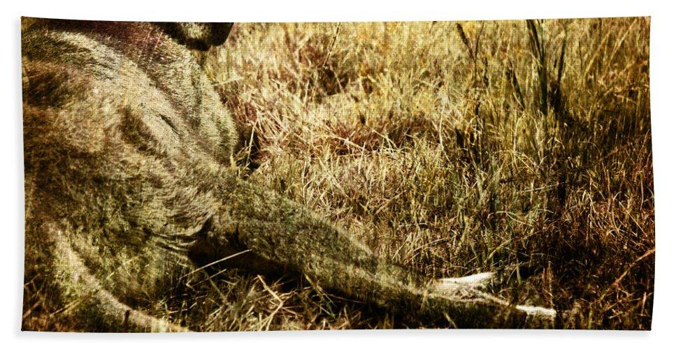 Cangaroo Bath Towel featuring the photograph Siesta by Angel Ciesniarska