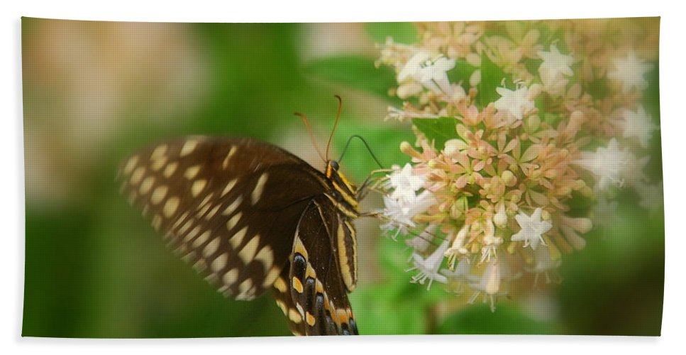 Sign Of Spring Bath Sheet featuring the photograph Sign Of Spring by Susanne Van Hulst