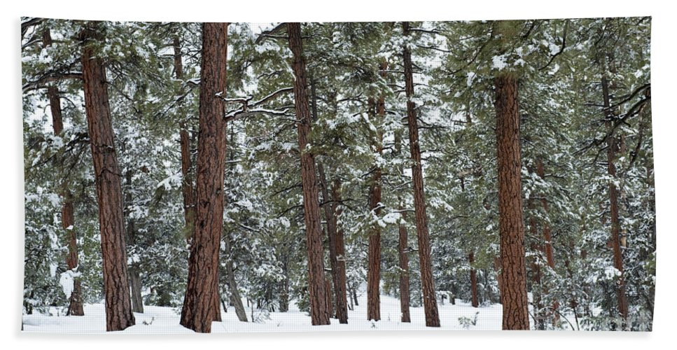 Southwest Bath Sheet featuring the photograph Silence Of The Woods by Sandra Bronstein