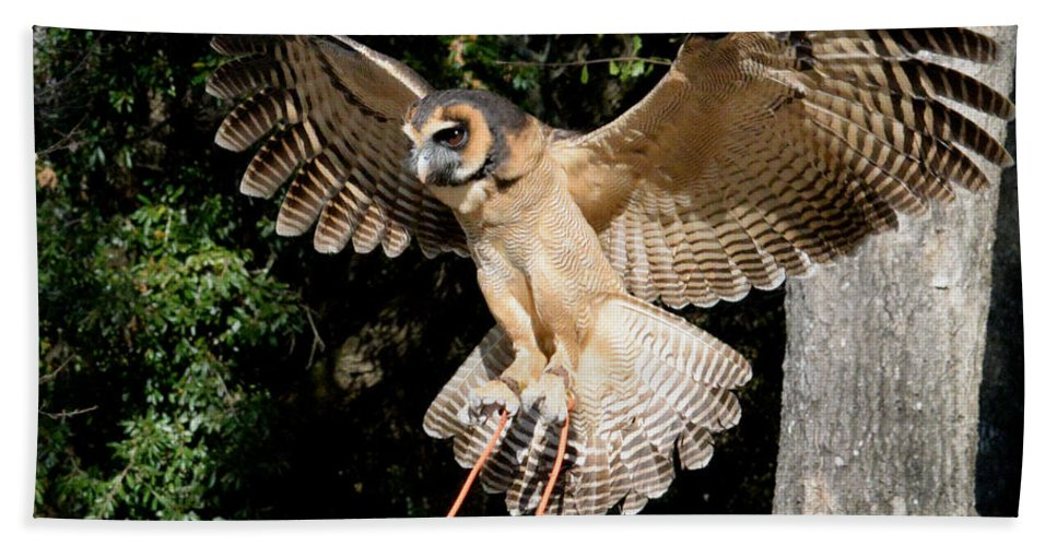 Asian Brown Wood Owl Bath Sheet featuring the photograph Silent Flight by Erin O'Neal-Morie