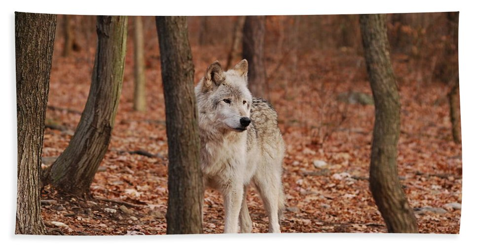Wolf Hand Towel featuring the photograph Silent One by Lori Tambakis
