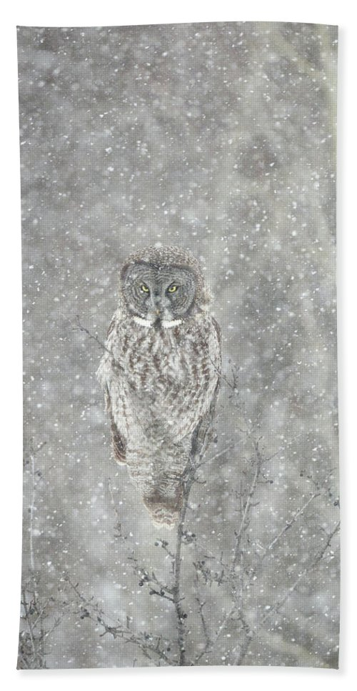 Owl Hand Towel featuring the photograph Silent Snowfall Portrait II by Everet Regal