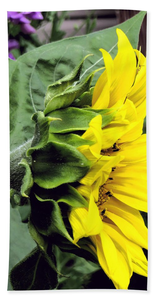 Profile Of A Sunflower Hand Towel featuring the photograph Silhouette Of A Sunflower by Kathleen Sartoris
