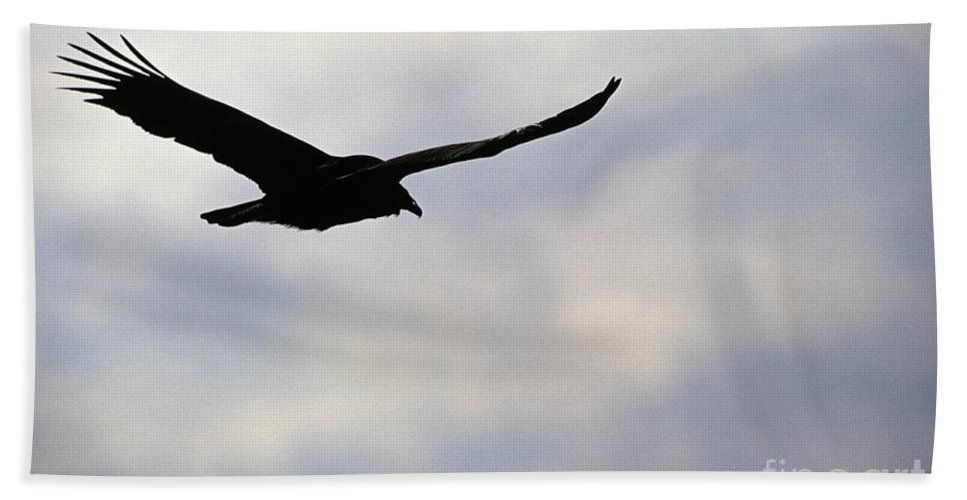 Silhouette Bath Towel featuring the photograph Silhouette Of A Turkey Vulture by Erin Paul Donovan