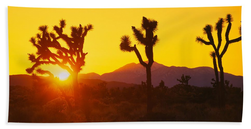 Photography Bath Sheet featuring the photograph Silhouette Of Joshua Trees Yucca by Panoramic Images