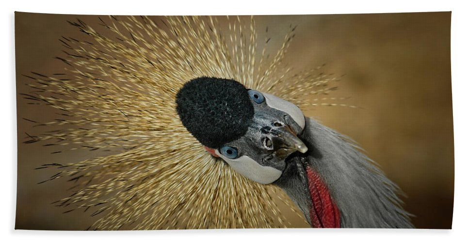 African Crowned Cranes Hand Towel featuring the photograph Silly Bird by Ernie Echols