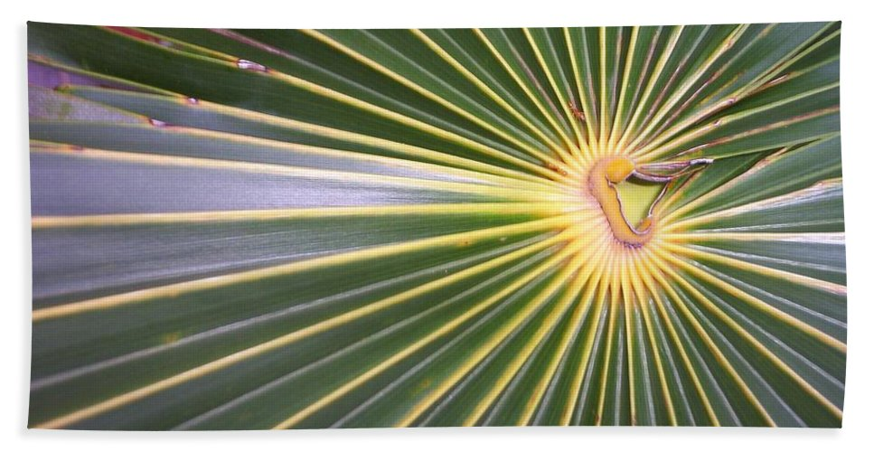Nature Bath Sheet featuring the photograph Silver Palm by Kimberly Mohlenhoff
