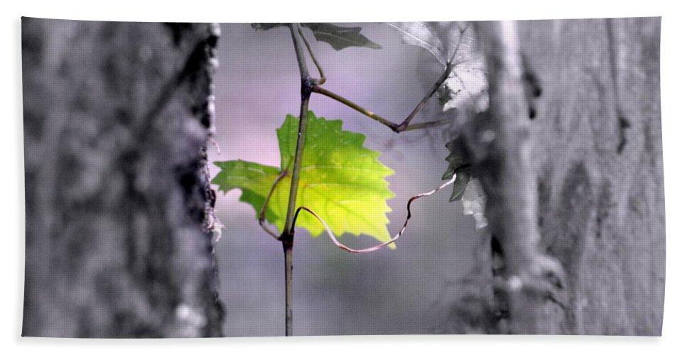 Tree Hand Towel featuring the photograph Simplicity by Jennifer Diaz