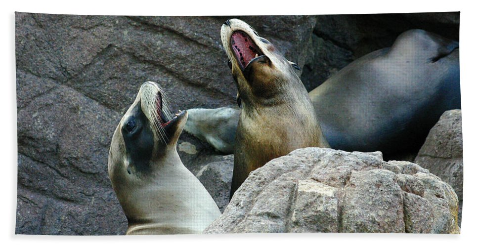 Sea Lions Hand Towel featuring the photograph Singing Sea Lions by Anthony Jones