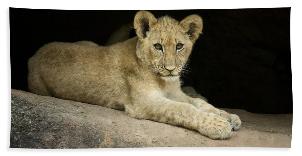Africa Bath Sheet featuring the photograph Single Cub by Linda D Lester