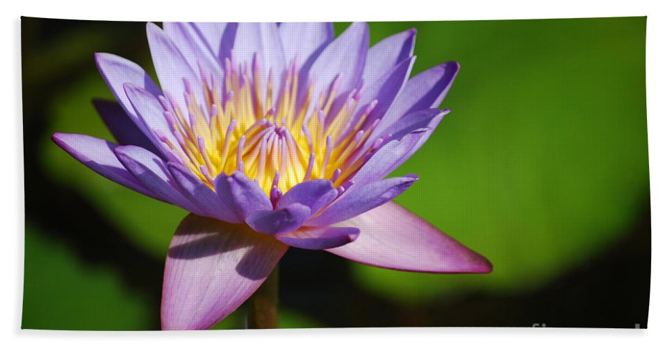 Nymphaea Hand Towel featuring the photograph Single Purple Water Lily Number One by Heather Kirk