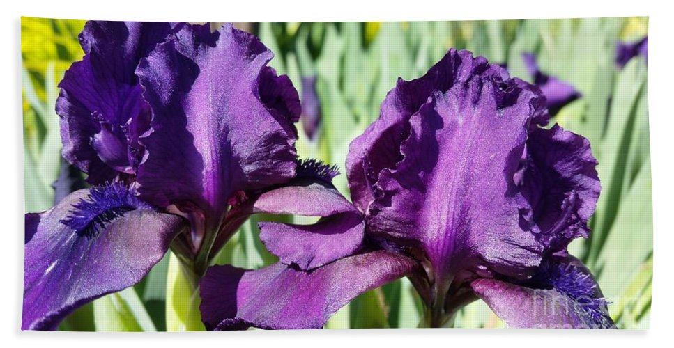 Iris Hand Towel featuring the photograph Sisters by Caryl J Bohn