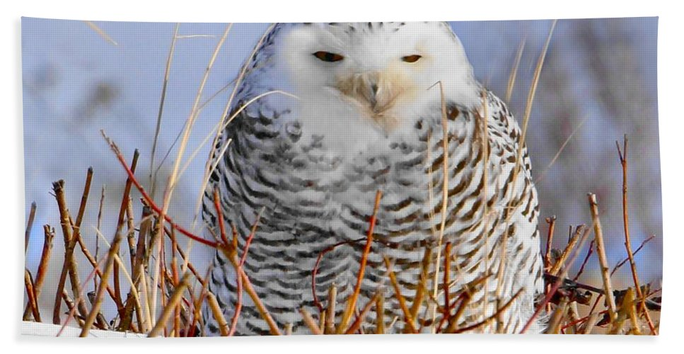 Snowy Owl Bath Sheet featuring the photograph Sitting Snowy Owl by J R Sanders